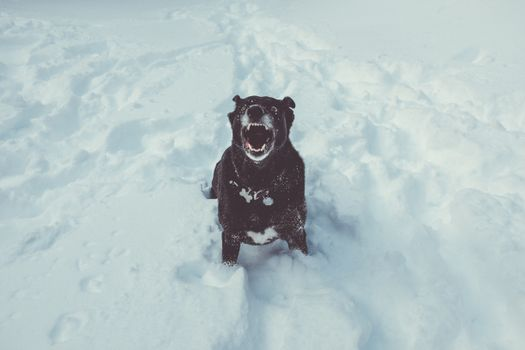 Photo free dog, grin, snow