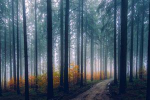 Фото бесплатно живописный, лесной массив, дымка