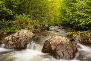 Бесплатные фото лес,деревья,водопад,камни,пейзаж