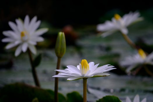 Photo free body of water, flowers, water-lilies