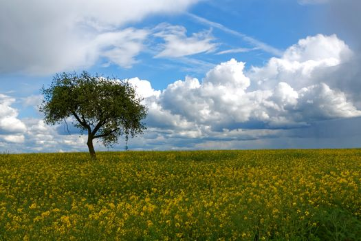 Photo free yellow flowers, field, clouds