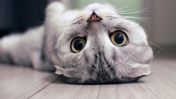 Заставки животные,кошка,детское животное,котята,деревянная поверхность,с ног на голову,глубина резкости
