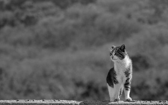Заставки одинокий, уличный, кот