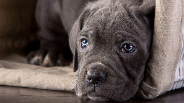 Photo free animals, dog, puppies