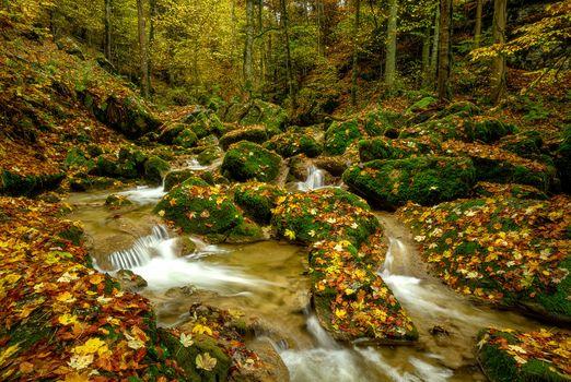 Заставки пейзаж, осенние листья, ручей