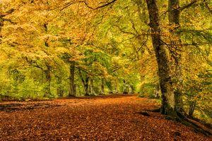 Photo free landscape, park, road