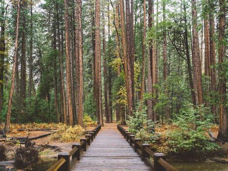 Photo free wilderness, forest, ecosystem