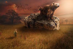 Фото бесплатно закат, медведи, поле