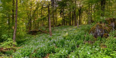 Бесплатные фото лес, деревья, цветы, природа, пейзаж, панорама