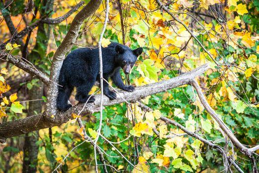 Заставки лес, медведь, Смоки национальный парк