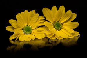 Photo free flower arrangement, dahlia, black background