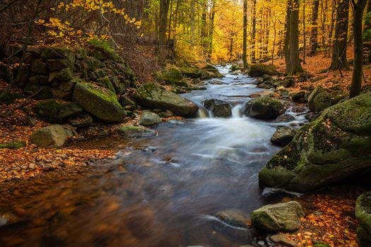 Photo free autumn foliage, autumn rivers, foliage