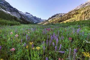Бесплатные фото поле, горы, цветы, пейзаж