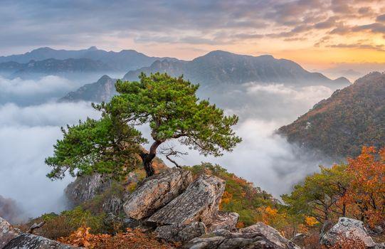 Фото бесплатно закат, одинокое дерево, сосна