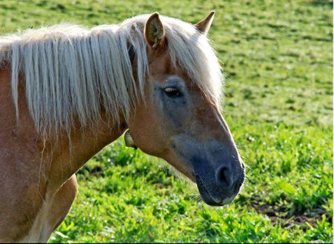 Заставки лошадь, вид в профиль, трава
