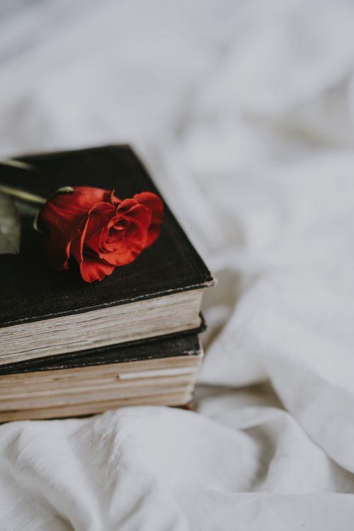 Обои роза, книга, цветок, размытость, rose, book, flower картинки на телефон