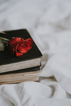 Photo free rose, book, flower
