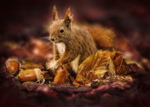 Photo free squirrel, rodent, acorns