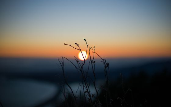 Photo free sunset, blade of grass, sun