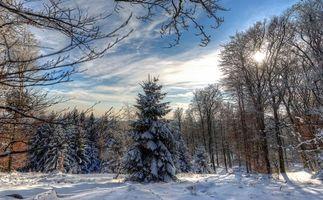 Фото бесплатно зима, лес, деревья, снег, сугробы, пейзаж