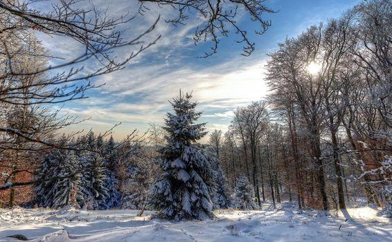 Бесплатные фото зима,лес,деревья,снег,сугробы,пейзаж