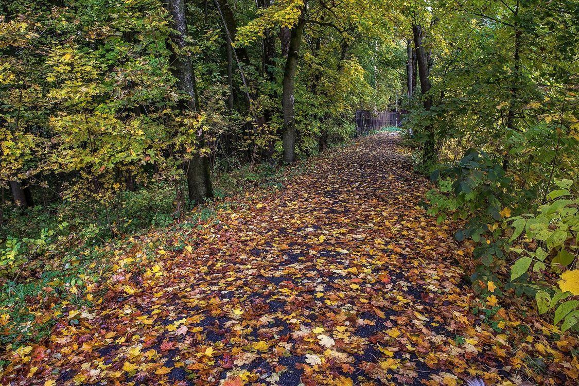Фото бесплатно Архангельское, Красногорский район, Московская область, Россия, парк, лес, дорога, деревья, осень, пейзаж, пейзажи