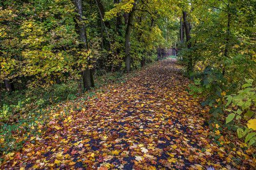 Photo free Russia, park, autumn