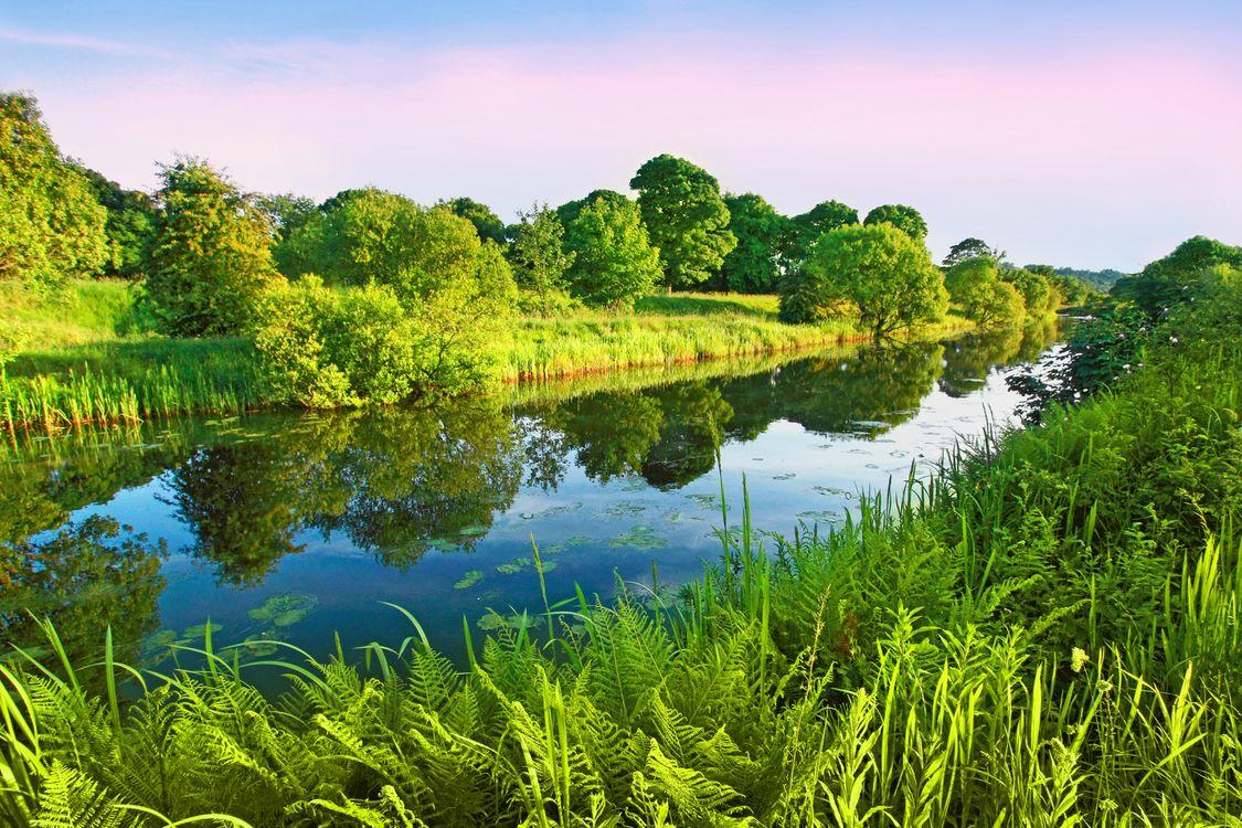 Фото бесплатно лето, река, деревья, пейзаж, пейзажи