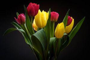 Фото бесплатно цветы, букет, тюльпаны