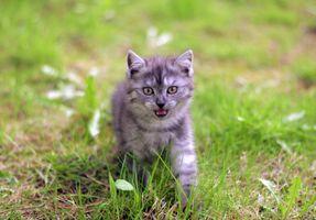 Фото бесплатно котёнок, животное, кошка
