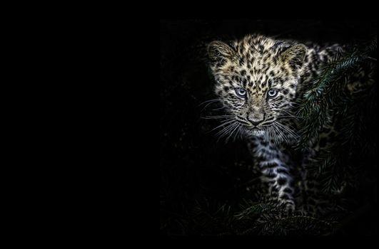 Заставки кошка, зверь, леопард