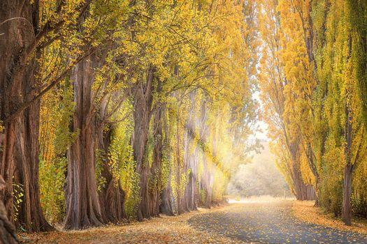 Photo free alley, autumn, sun rays