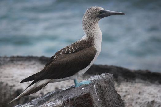 Фото бесплатно птица, чайка, клюв