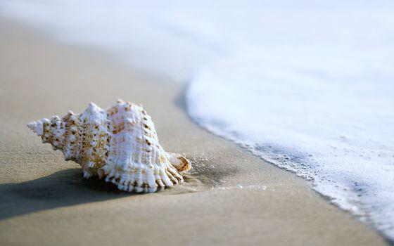 Фото бесплатно ракушка, пляж, улитка