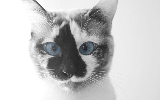 Фото бесплатно прекрасная, лицо, голубые глаза