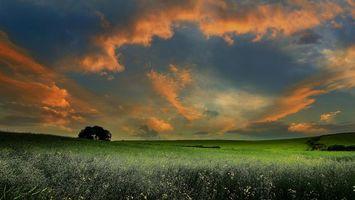 Фото бесплатно закат, поле, дерево
