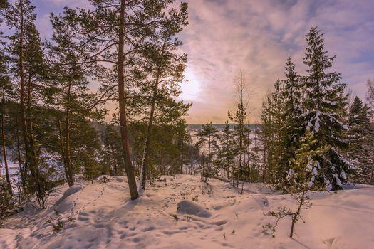 Фото бесплатно природа, следы, деревья