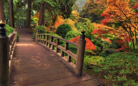 Заставки сад, деревья, ручей