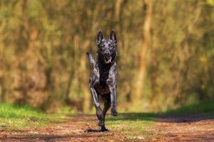 Фото бесплатно собака, бег, прогулка