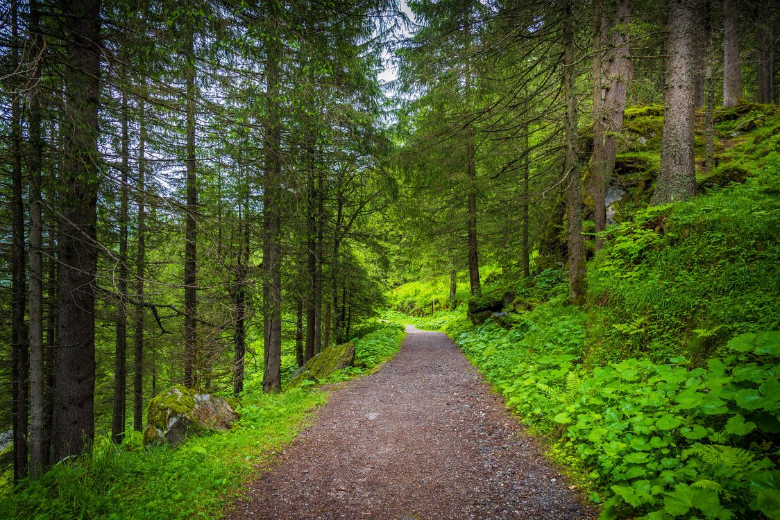 Обои лес, деревья, дорога, природа, пейзаж, лесная дорога на телефон | картинки пейзажи