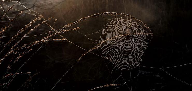 Фото бесплатно паутина, паук, фотографии