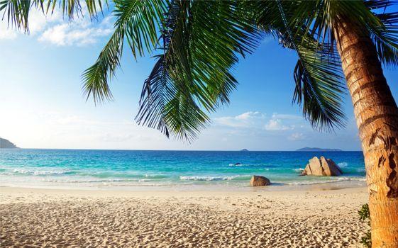 Смотреть фото тропики, пляж бесплатно