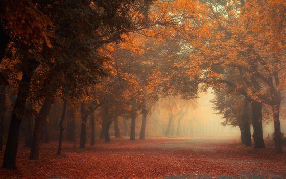 Фото бесплатно пейзажи, листья, опавшие листья