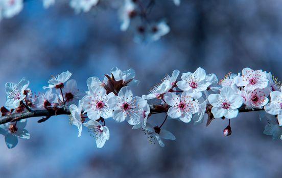Заставки цветущая ветка, весна, цветение