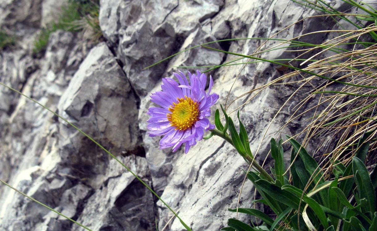 Фото цветы трава скалы - бесплатные картинки на Fonwall