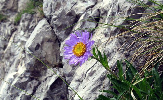 Фото бесплатно цветы, трава, скалы