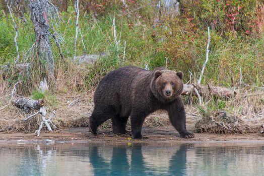 Photo free Animal, Alaska, Lake Clark National Park