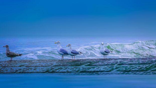 Фото бесплатно море, причал, птицы