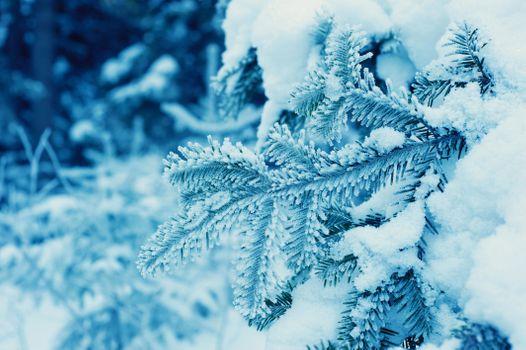 Фото бесплатно зима, снег, ель
