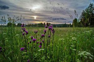 Бесплатные фото закат, поле, трава, цветы, пейзаж